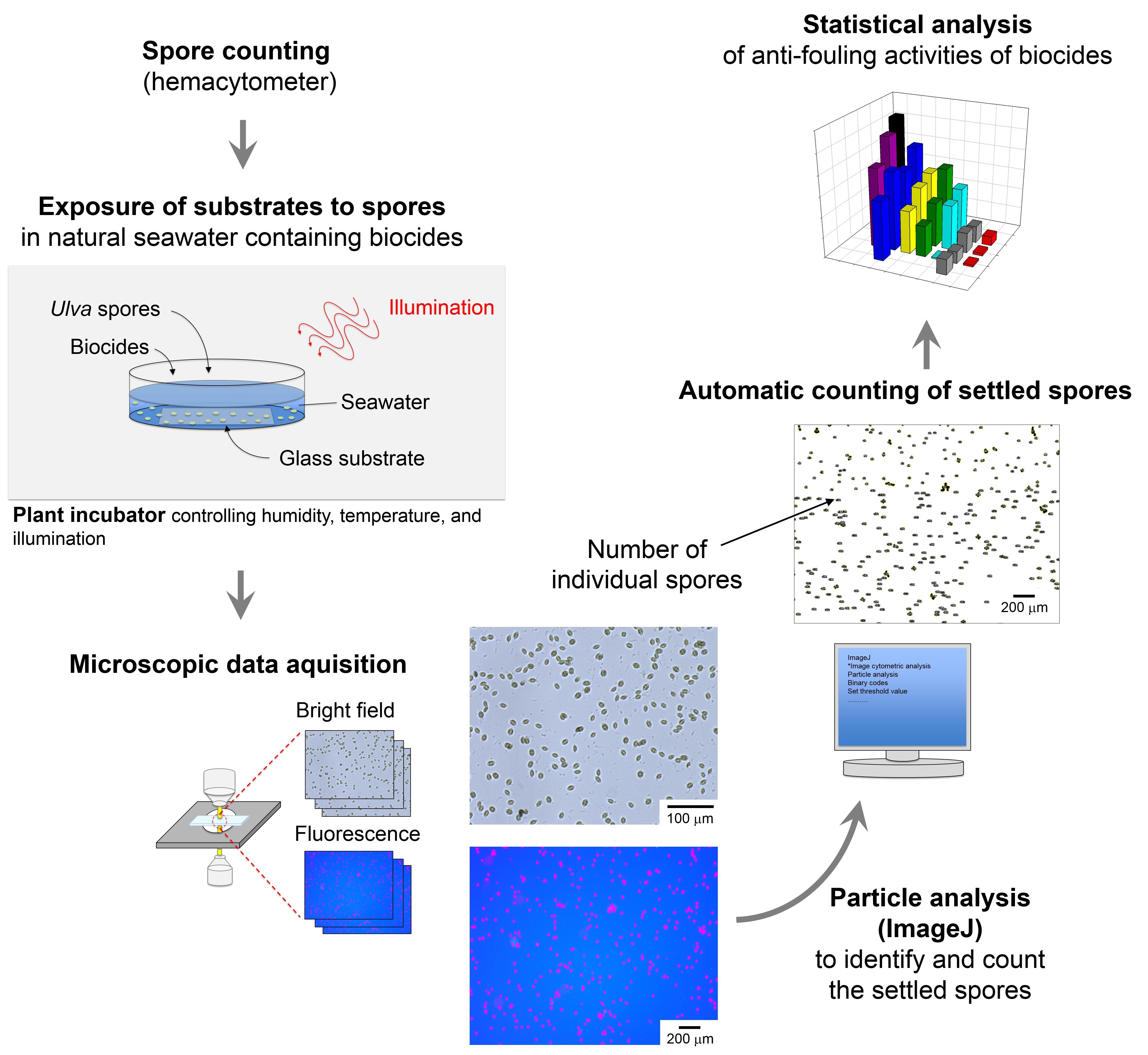 Publications – Nano-Bio Interface Laboratory